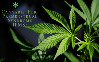 Using cannabis to manage PMS symptoms during the pandemic
