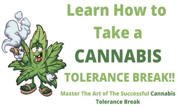 Learn How to Take a Tolerance Break From Cannabis