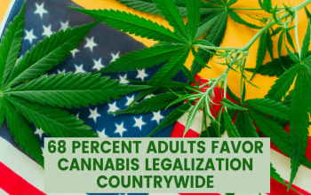 68 Percent Adults Favor Cannabis Legalization Countrywide